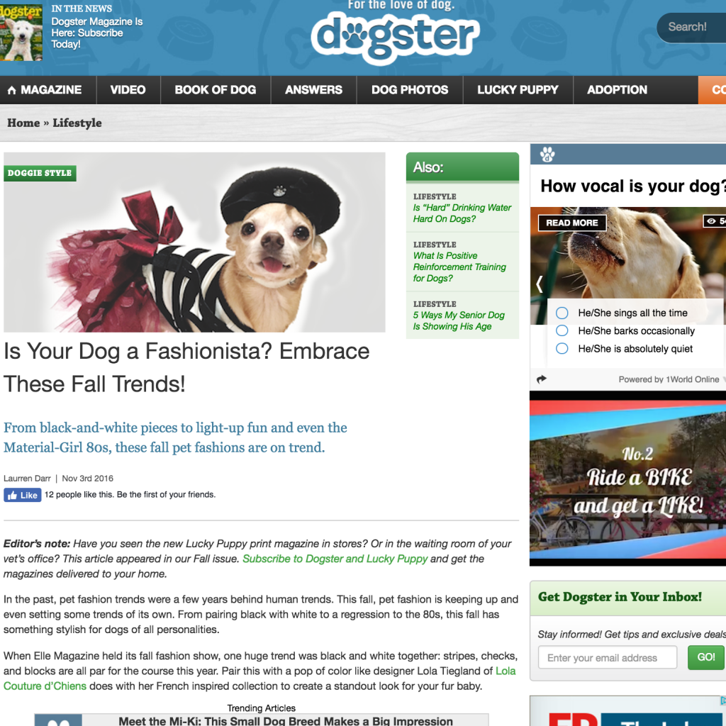 dogster-2